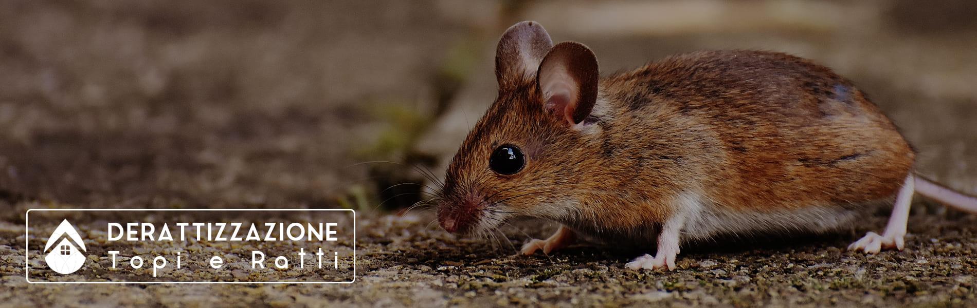 Derattizzazione topi e ratti | Emmada